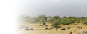 visiting tanzania - tours & safaris